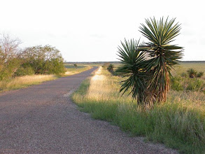 Photo: Laguna Atascosa NWR Tour Loop Drive