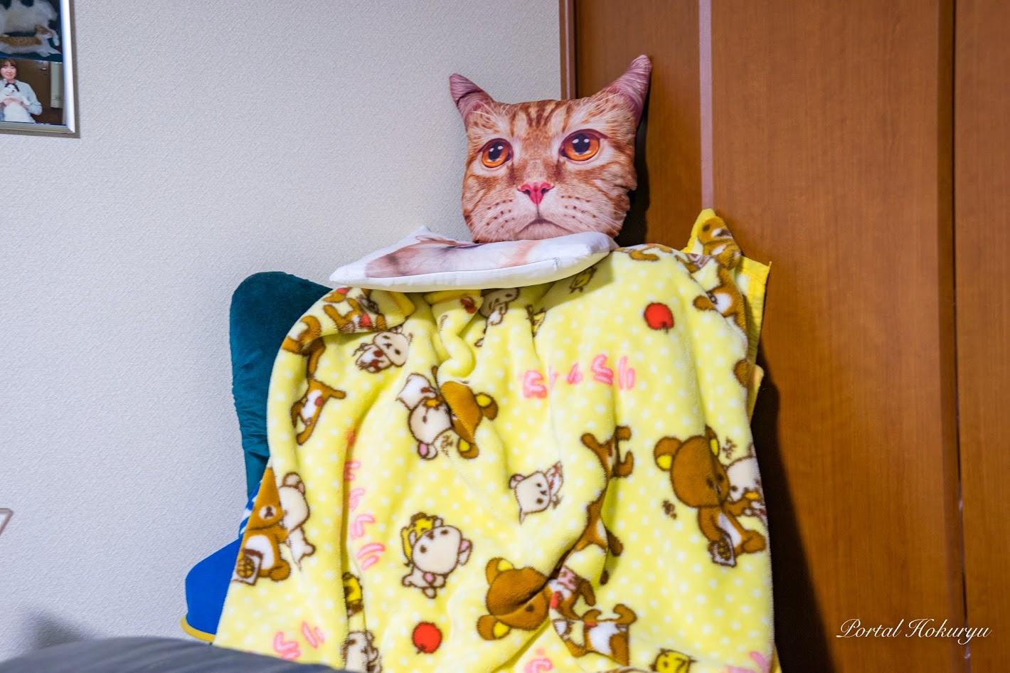 リビングの主・ネコちゃん