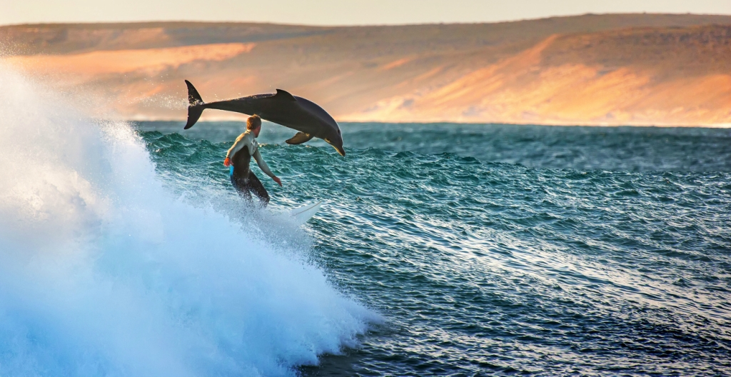 Surfing with a dolphin!
