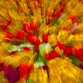 by Jim Jones - Abstract Patterns ( art, flowers, nature, abstract, tulip )