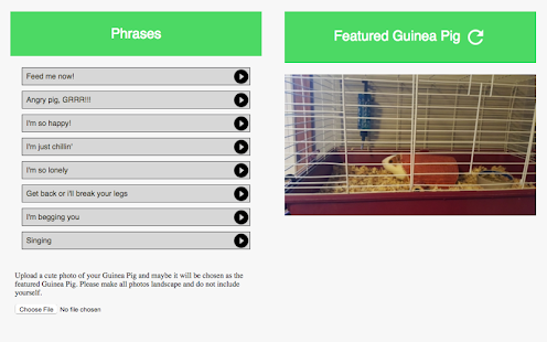Guinea Pig Communicator- screenshot thumbnail