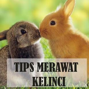 Tips Mudah Merawat Kelinci - náhled