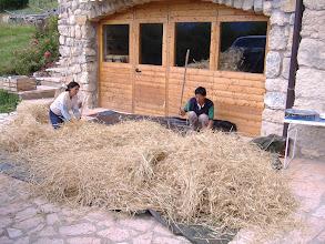 Photo: grano raccolto, trebbiamo a mano