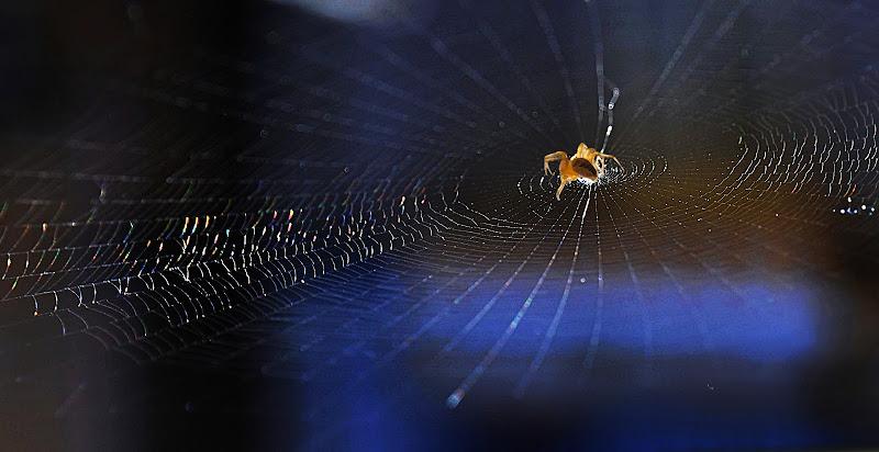 Il ragno atelofobico della sua tela perfetta di AntoMarPh