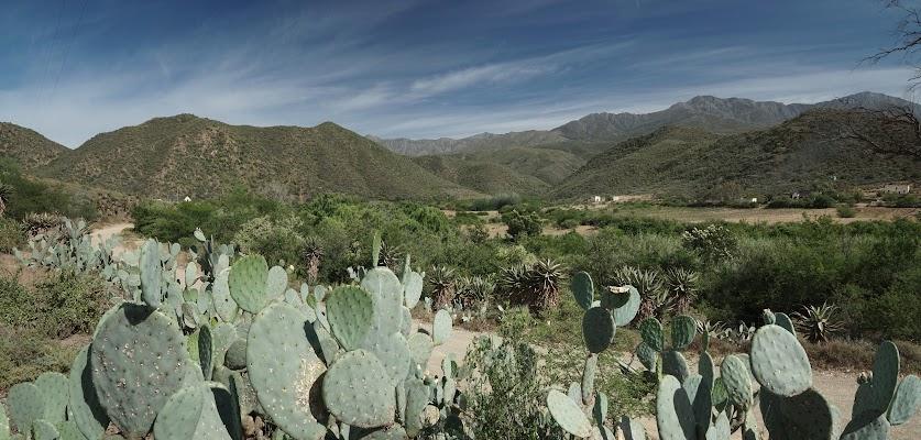 Kakteen vor den Swartbergen im grünen Groenfontein Valley