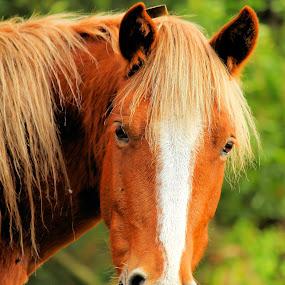 My horse by Vasco Morais - Animals Horses