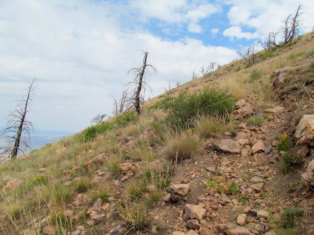 Rocky trail above the treeline