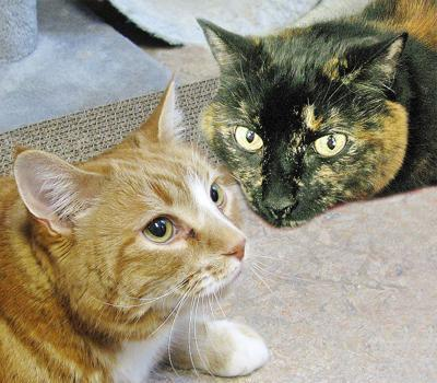 People For Cats - June 28, 2019 | Columns | capenews.net
