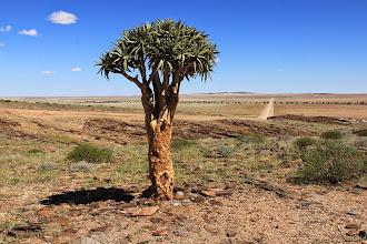 Photo: Kokerboom en de weg die wij zovaak reden in Namibië