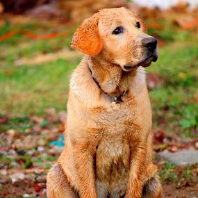 by Mark Wathen - Animals - Dogs Portraits