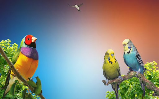 Bird Sound Apk Download 1