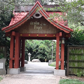 Realm of the Tiger by Denise DuBos - Buildings & Architecture Architectural Detail ( baton rouge, zen, asian, zoo, toger, architecture, home )