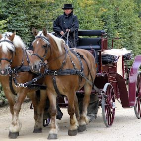 Good old days by Philippe Smith-Smith - Transportation Other ( horses, carriage, versailles, castle, transportation )
