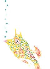 Photo: Fish 4