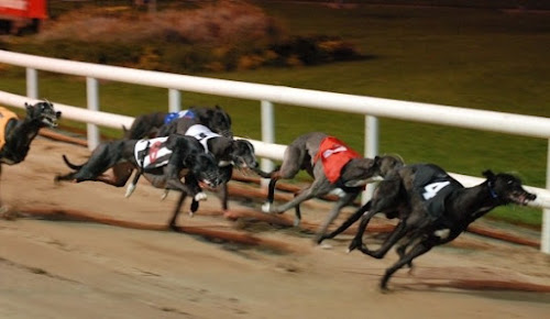 Photo Harold's Cross Greyhound Stadium