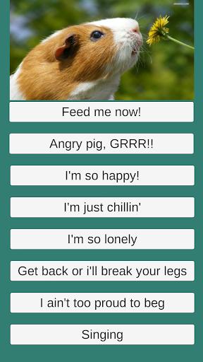 Guinea Pig Communicator