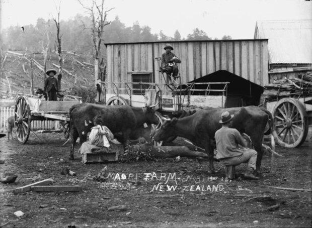 eight_col_Maori_group_at_a_farm_in_Winiata_.jpg