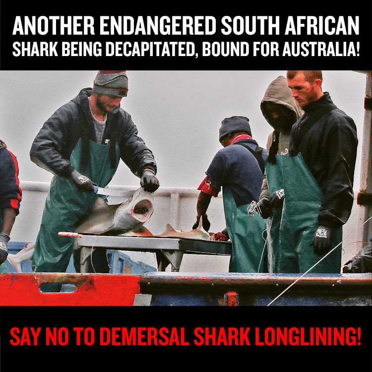 SA shark conservationists are campaigning for an end to demersal shark longlining