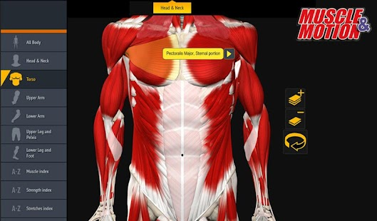 Muscle and Motion Anatomy- screenshot thumbnail