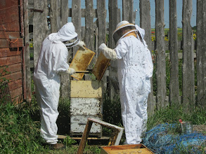 Photo: Getting the honey-filled supers