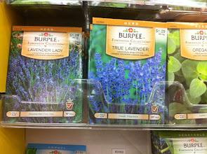 Photo: Pensé que comprar algunas semillas de lavanda sería un buen regalo también, encontré dos variedades, así que compré las dos.