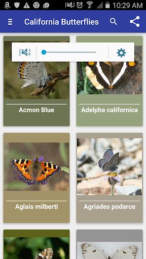 California Butterflies
