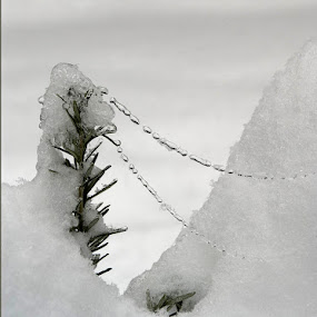Ice Necklace by Marie Browning - Nature Up Close Leaves & Grasses ( ice, snow, plants, rosemary, spider web,  )