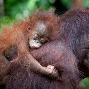 Sleepy by Anne Young - Animals Other Mammals ( pwcbabyanimals )