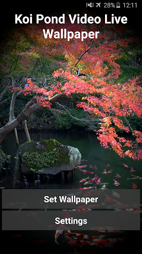 Koi Pond Video Live Wallpaper
