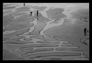 Photo: Outlining the small waterways.  Ocean Beach, SF