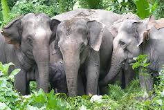 China's Last Elephants