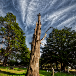The Eutaw Cemetery by Kent Moody - City,  Street & Park  Cemeteries ( hdr, tree, graves, texas, markers, eutaw, cemetery )