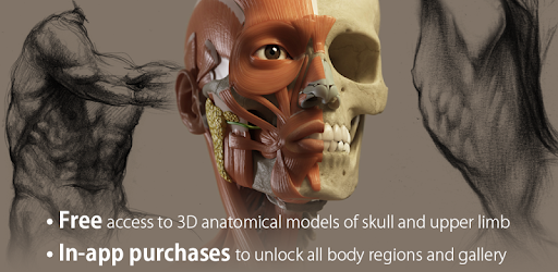 3D Anatomy for the Artist - Apps on Google Play