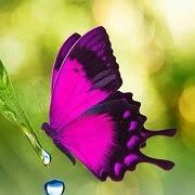 Примета бабочка залетела
