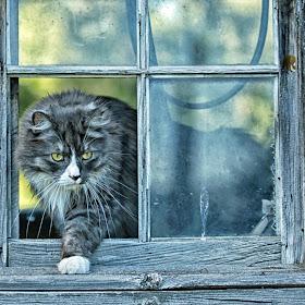 No Pane in the Window.jpg