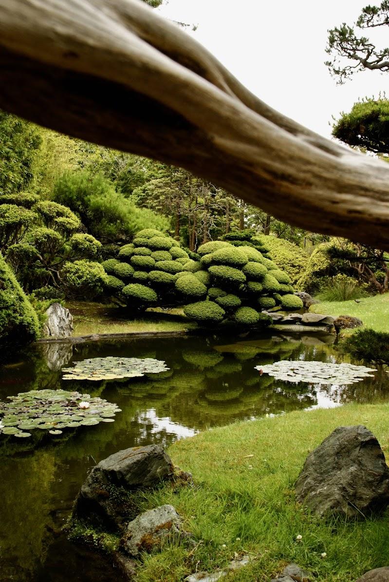 Armonia giapponese di axlphoto77
