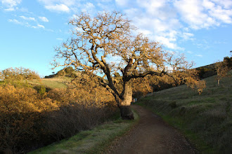 Photo: Hidden Springs Trail (on the way to Coyote Peak)
