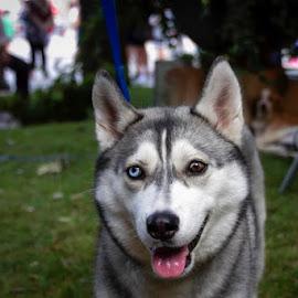 by Domenico Liuzzi - Animals - Dogs Portraits