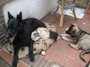 Photo: Gewoon naast elkaar liggen zonder te klieren