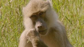 Africa's Edens thumbnail