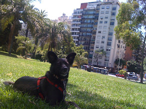 Photo: Little dog at Las Heras in Buenos Aires