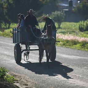 the family's car by Cristobal Garciaferro Rubio - Transportation Other ( family, donkey )