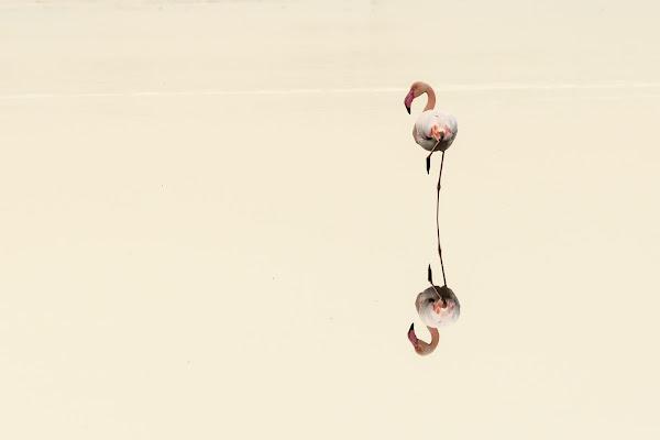 """""""Flamingo minimal"""" di Bitop62"""