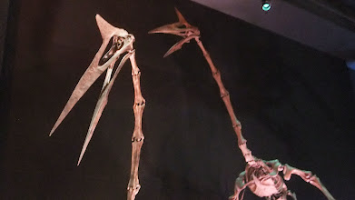 Photo: Quetzalcoatlus at Houston Museum of Natural Science.