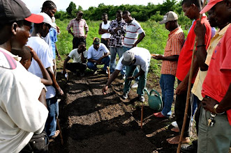 Photo: Seeding pre-germinated rice seeds; Ferrier, Haiti, June 2010 [Photo by Erika Styger]
