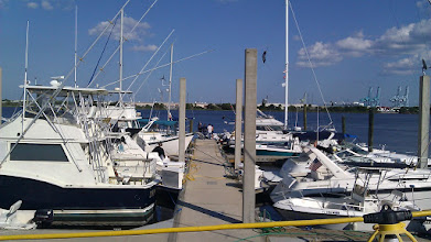 Photo: Dames Pointe Marina. Looking towards Blunt Island, a big commercial operation.
