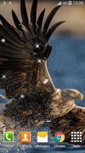 Orel Živá Tapeta - náhled