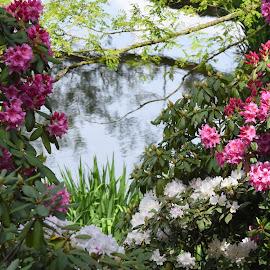 by Lorraine D.  Heaney - Flowers Flower Gardens