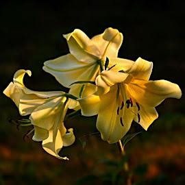 by Miroslava Winklerová - Flowers Flower Gardens