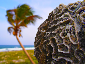 "Photo: ""La Mente de Akumal"" ~ Akumal, Mexico © 2011 Skip Hunt"